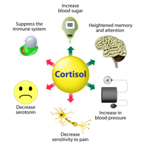 cortisol-acne